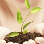 limpeza natural e ecológica